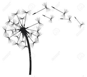 17472577-dandelion-in-the-wind-Stock-Vector-dandelion-stylized-black